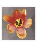 Sunshine Tulip Prints by Erin Clark