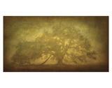 St. Joe Plantation Oak in Fog 3 Poster autor William Guion