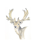 Stag Prints by  Art Marketing