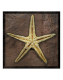 Starfish Prints by John W. Golden