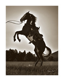 Stallion Silhouette Poster by Barry Hart