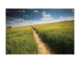 Summer Path Art by Michael Hudson