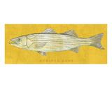 Striped Bass Affiche par John Golden