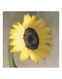 Sunflower Poster by Erin Clark