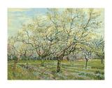 Vincent van Gogh - The White Orchard, 1888 Plakát