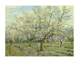 The White Orchard, 1888 Posters by Vincent van Gogh