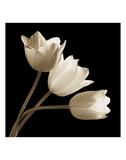 Trois tulipes Posters par Michael Harrison