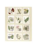 Surrey Garden Fragments Print by Annabel Hewitt