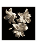 Three Lilies Prints by Michael Harrison