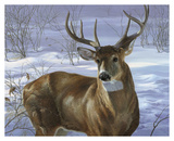 Through My Window - Whitetail Deer Prints by Joni Johnson-godsy