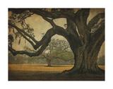 Two Oaks in Rain, Audubon Gardens Prints by William Guion