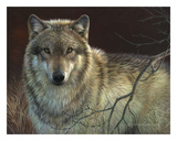 Uninterrupted Stare - Gray Wolf Prints by Joni Johnson-godsy