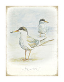 Terns Poster by  Art Marketing