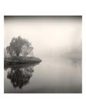 Tree, Study 9 Prints by Andrew Ren