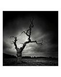 The Last Tree Print by Marcin Stawiarz