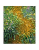 The Path in the Iris Garden Posters by Claude Monet
