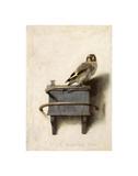 Le Chardonneret, 1654 Posters par Carel Fabritius
