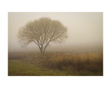 Tree in Field Prints by David Lorenz Winston