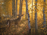 Whitetail in Aspens Prints by Greg Alexander