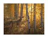 Whitetail in Aspens Posters by Greg Alexander