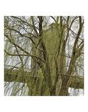 Veiled Brooklyn Bridge (detail) Posters by Erin Clark