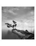 Moises Levy - Su Ağacı - Reprodüksiyon