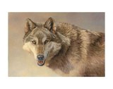 Wolf Portrait Posters by Kalon Baughan