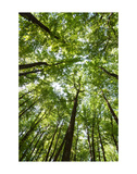 Woods, Shenandoah National Park Lámina por Michael Hudson