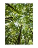 Woods, Shenandoah National Park Print by Michael Hudson