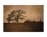Tree and Fence II Prints by David Lorenz Winston