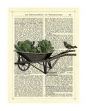 Wheelbarrow Lettuce & Bird Prints by Marion Mcconaghie