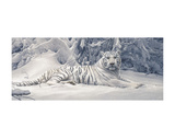 White Tiger Poster by Daniel Smith