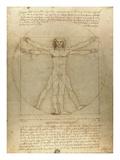 Vitruvisk mann Plakater av Leonardo Da Vinci