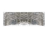 Winter Wonderland Prints by Erin Clark