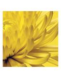 Jenny Kraft - Yellow Mum 2 Obrazy