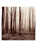 Winter Woods Prints by Erin Clark