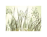 Watery Grasses 3 Posters by Jenny Kraft