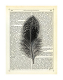 Feather Print by Marion Mcconaghie