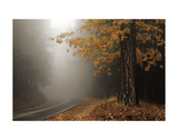 Yellow Leaves in Fog Prints by David Lorenz Winston