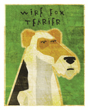 Wire Fox Terrier Print by John W. Golden