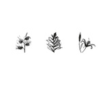 X-Ray Foxglove Triptych Prints by Bert Myers