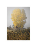Yellow Tree & Teasel Poster by David Lorenz Winston