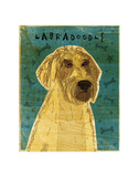 Yellow Labradoodle Prints by John W. Golden