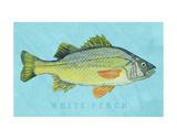 White Perch Affiche par John W. Golden