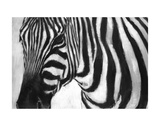 Zebra Prints by  Art Marketing