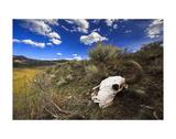 Yellowstone Bison Skull Prints by Jason Savage