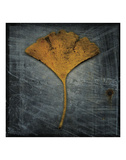 Gingko 2 Posters by John W. Golden