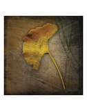 Gingko Posters by John W. Golden