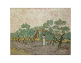 Women Picking Olives, 1889 Posters by Vincent van Gogh
