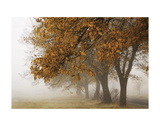 Fog in Fall Poster by David Winston